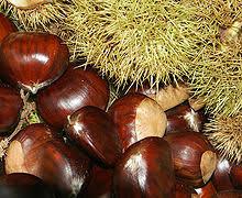 """""""""""December fruits and vegetables - Chestnut"""""""