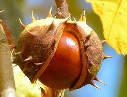 """""""December fruits and vegetables - Chestnut"""""""