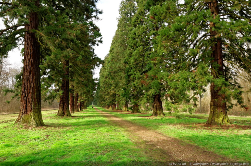 """""""Pomme - a well-controlled - Sequoias"""""""